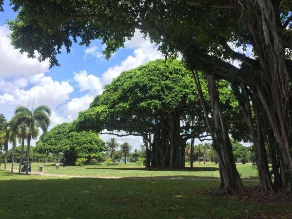 albero-foto-ridotta